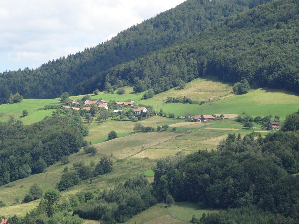 Makowica